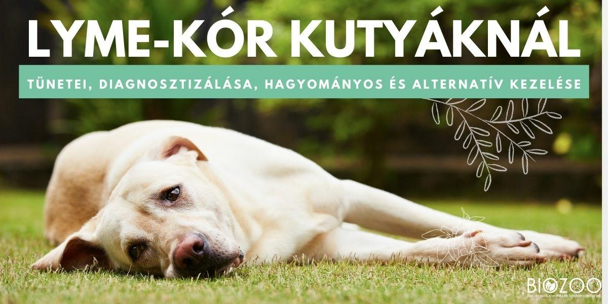 Lyme kór kutyáknál