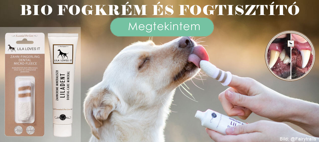 kutya fogkefe