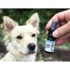 Bio CBD olaj kutyáknak