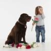 Tickless ultrahangos kullancsriasztó kutyáknak